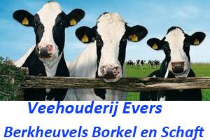 Veehouderij Evers